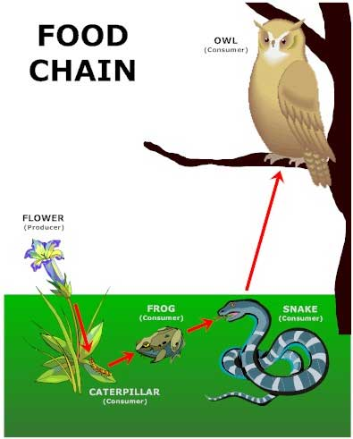 Stop Using Leather Accessories as well 27977285 moreover Turtle Vs Heron Not So Clear Cut Meal moreover Animals likewise Borneo Cloud Forest. on spider in everglades